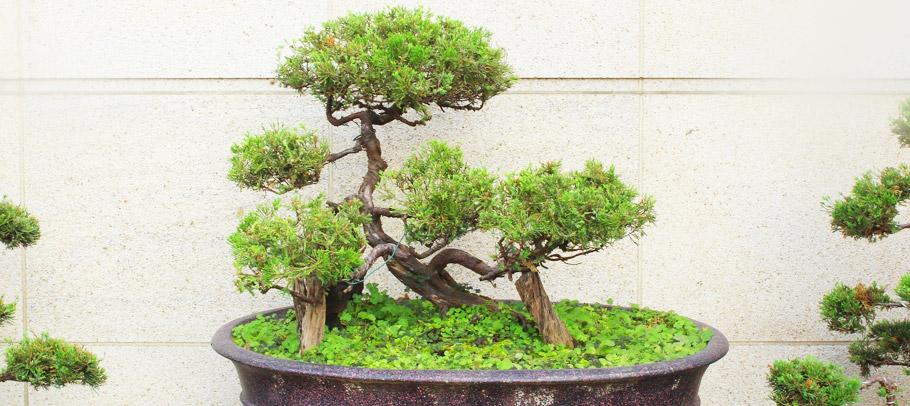episode16-bonsai